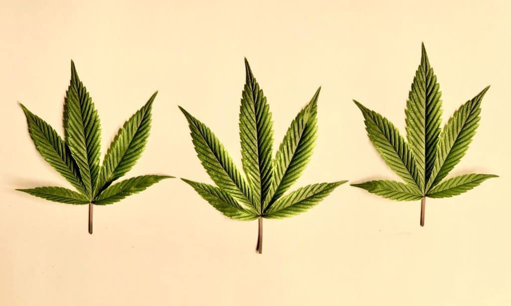 Everything You Need To Know About Cannabis And Hemorrhoids